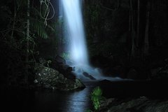 Mt Tamborine National Park 4WD Nocturnal Rainforest and Glow Worm Tour