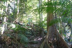 Kuranda Guided Interpretive Rainforest Walk Including Refreshments