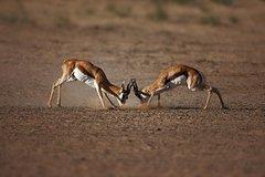 Actividades,Actividades,Actividades de aventura,Actividades de aventura,Salidas a la naturaleza,Salidas a la naturaleza,Safari en Ciudad del Cabo