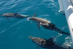 Imagen Fraser Island Sailing Adventure Cruise and Dolphin Watching from Hervey Bay