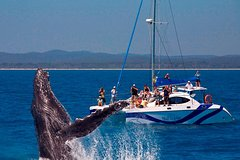 Imagen Blue Dolphin Small-Group Hervey Bay Whale Watching Cruise
