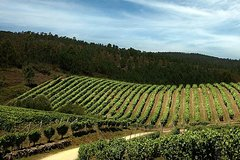 Imagen Valencia Wine Tour with Tasting and Lunch for Groups