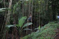 Imagen Excursion naturelle dans la forêt équatoriale de St Kitts