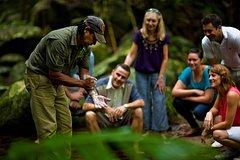 Ver la ciudad,Salir de la ciudad,Tours temáticos,Tours históricos y culturales,Excursiones de un día,Excursión a Bosque tropical de Daintree,Excursiones desde Cairns