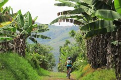 Imagen 7-Day Biking Tour: Coffee, Cultural and Cocora Valley from Pereira