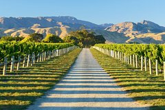 Imagen Full-Day Marlborough Wine Tour Including Wine Tasting