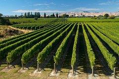 Imagen Half-Day Marlborough Wine Region Tour from Picton or Blenheim