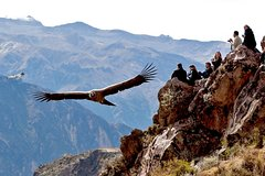 Imagen Condor Lookout Point Hike in Chonta from Cusco