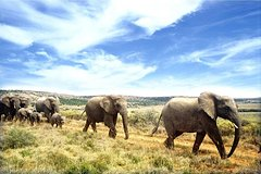 Full-Day Addo Elephant National Park Safari from Port Elizabeth Private Car Transfers