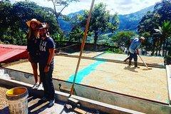 City tours,Gastronomy,Gastronomic tours,Gastronomic tours,Medellín Tour,Excursion to Guatapé