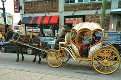 City tours,Other vehicle tours,