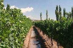 Imagen Recorrido por las bodegas de vino en Mendoza con la iglesia La Carrodilla
