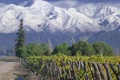 Imagen Full Day Tour: Culture of Wine in Mendoza