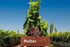 Imagen Conviértase en vinicultor por un día en Mendoza