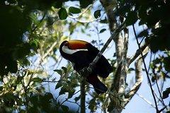 Imagen BirdWatching in Iguazu Falls - 2 nights