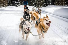 Imagen White Adventure in Ushuaia with Sled Dogs
