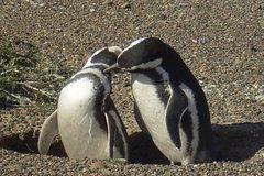 Imagen Excursión a la reserva de pingüinos en Punta Tombo desde Puerto Madryn