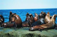 Imagen Excursión a Punta Loma con leones marinos desde Puerto Madryn