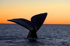 Imagen Excursión a la reserva Península Valdés con paseo en barco y avistamiento de ballenas