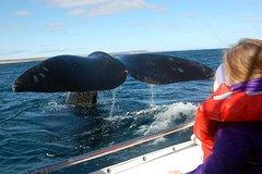 Imagen Paseo en barco para avistamiento de ballenas en Península Valdés