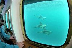 Imagen Yellow Submarine: Paseo en barco para avistamiento de ballenas en Península Valdés