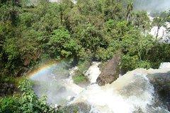 Imagen Cataratas del Iguazú: visita al lado brasileño en el Parque de las Aves (Parque das Aves)
