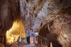 Imagen Small Group Waitomo Ruakuri Caves and Kiwi tour from Auckland