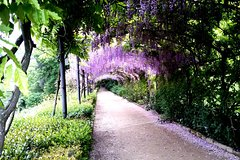 Gardens of Florence Private Tour