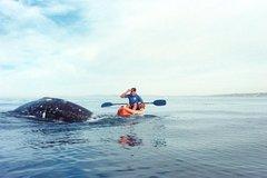 Activities,Activities,Activities,Water activities,Water activities,Water activities,Nature excursions,Sports,Sports,