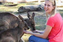 Melbourne Shore Excursion: Mornington Peninsula, City Sights, Australian Animals