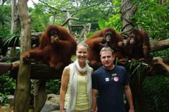 Private Tour: Morning Zoo tour - Jungle Breakfast with OrangUtans Option