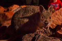 Imagen Alice Springs Desert Park Nocturnal Tour