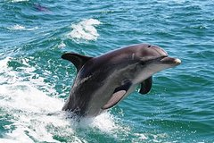 Imagen Half-Day Mandurah Canals & Dolphin Watch Tour