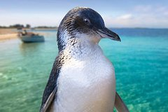 Imagen Full-Day Penguin Island & Fremantle Town