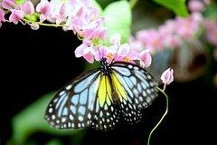 Imagen Kuala Lumpur Go Nature And Garden Private Tour