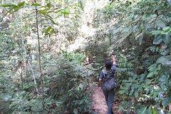 Imagen Kuala Lumpur Rainforest Day Tour