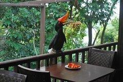 Imagen Kuala Lumpur Bird Park Tour With Transfer