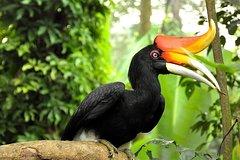Imagen Kuala Lumpur Bird Park Admission with Transfer