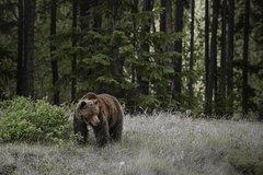 Jasper Canadian Rockies Jasper Summer Wildlife Discovery Tour 3872P17