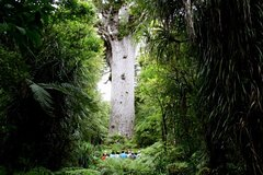 Imagen Giants and Glow Worms Day Tour