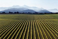 Imagen Full-Day Marlborough Wine Tour from Picton or Blenheim