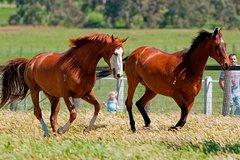 Imagen Living Legends Champion Racehorse Guided Tour