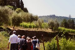 Valpolicella and Amarone wine tasting experience from Verona