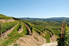 Amarone wine tasting experience at Cantine Tommasi from Verona