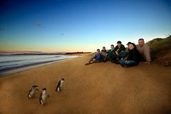 Imagen Phillip Island Ultimate Penguin Eco Tour or Skybox Experience