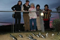 Imagen Phillip Island Penguin Parade Tour from Melbourne Including Koala Conservation Centre