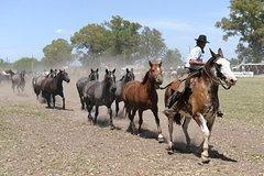 Imagen Excursión gaucha de un día desde Buenos Aires: Rancho Don Silvano