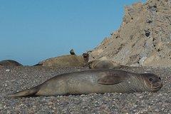 Imagen Excursión de un día completo a Punta Ninfas desde Puerto Madryn.