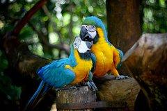 Imagen Entrada al parque de aves Güira Oga con el ascenso de las Cataratas del Iguazú