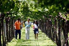 Imagen Excursión privada de cata de vinos y viñedos desde Mendoza.